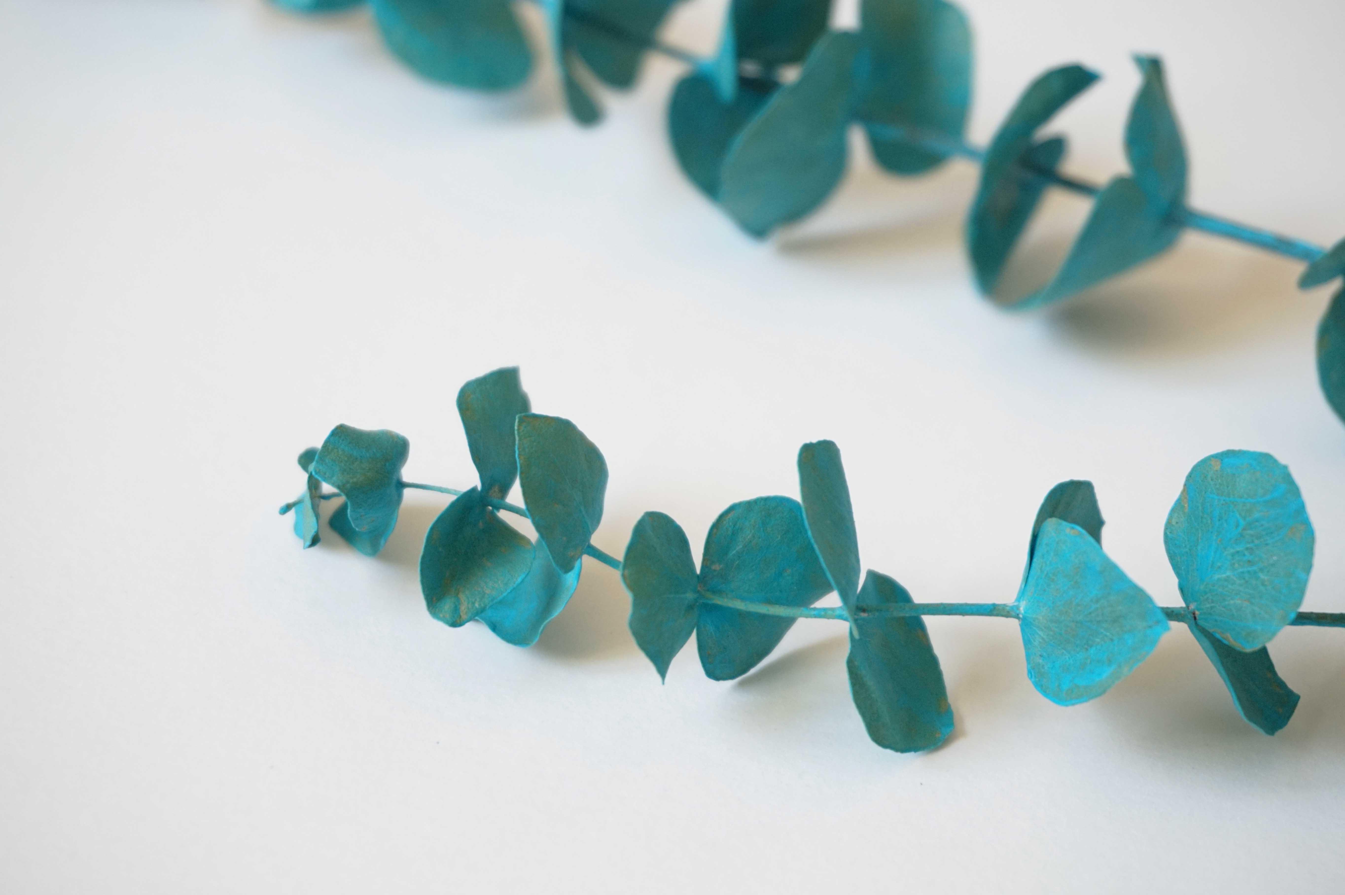 que faire avec des branches d'eucalyptus ? – flodiy